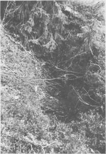 Å lage dyregraver har vært en eldgammel fangstmåte. Men det er ikke lett å finne igjen dyregraver fra forhistorisk tid. Denne er fra Aunemarka og har nok vært i bruk i tida etter middelalderen.