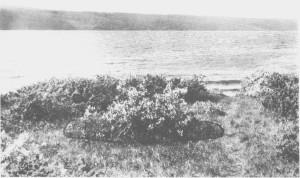 Det er ikke alltid lett å tolke spora i naturen. Dette bildet fra Gjetneset ved Stugusjøen kan vise en gravhaug. Det er ikke gjort gravfunn på stedet, men derimot andre løsfunn og kolrester som kan tyde på at det har vært en boplass her så tidlig som i steinalderen. Bildet er tatt i 1933.