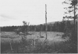 Det varfra slike åpne myrsletter at mesteparten av foret ble tatt på 17-1800-tallet. Idag står bare stakkstonga igjen og vitner om at her harforegått slått. Bildet erfra Storfloen vest for Fossan og er tatt i 1987.