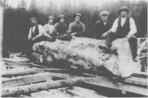 Saging på Løvøysaga. Jens Aashaug (til høgre) hadde hogget en svær stokk i Spødneslia og vedda med Løvøykarene at de ikke klarte å sage alt tømmeret. Denne stokken ble saga fra begge sider, og i tillegg kløyvd med øks. Løyvøykarene vant veddemålet.