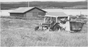 Moderne slåttonn utføres av én mann med traktor og fôrhøster. Magnus Rotvold i Stugudal holder på med silo slåtten i juli 1987.