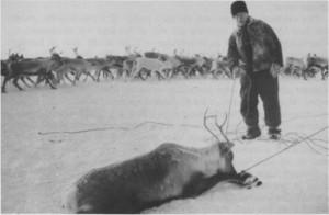 Anders Mortensen Nordfjell var født i Tydal i 1884. Han begynte som reingjeter i ung alder, og fikk rein som lønn. Ved dyktighet og flid økte han flokken og ble den største reineieren i Riasten. Han var formann i distriktet i en årrekke. Anders kjøpte småbruket Dalheim i Stugudal, og familien hadde både hest og kyr. På bildet er han med under reinslakting i Spaklarslia vinteren 1961—62.