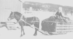 Ola Henmo kjører heim høy fra Molia ved Mosjøen i 1927. Det gikk med en hel dag til en slik tur.