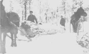 I 1932 —33 kjørte Johan Hilmo og Per Jonsen Hilmo tømmer for Thomas Angells stiftelser i skogene deres på Hilmo. Her har de fått med bare en stokk på lasset.