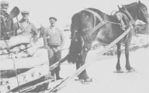 Setervedkjøring ved Svartåavollen i begynnelsen av 1940-tallet. Fra venstre Gunnar Berggård, Ingebrigt Berggård og Ola Søliås. Hesten må ha truger på vinterføret.