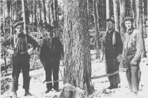 Tydalingene i Amerika satsa helst på arbeid de kjente og var vant med. Her har brørne Gjert og Anton Eriksen Rotvold (nr. I og 3 fra venstre) fått seg skogsarbeid. Men to-mannssaga er kanskje noe større enn den de var vant med i Tydal. Bildet er trulig tatt i staten Washington på vestkysten omkring 1915. Gjert og Anton utvandra i 1911.