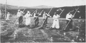 Mer gjødsling og oppdyrking av enga på heimejorda betydde bedrefôringfôr husdyra. På bildet er både karer og tauser i sving med å vende høyet på Nordpågarden på Aune, juli 1920. De gikk etter hverandre, og dess flere de var, jo fortere gikk det.